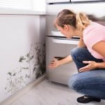mold damage cleanup coffeyville, mold damage coffeyville, mold removal coffeyville